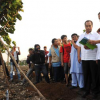 Jokowi: Bantaran Waduk Pluit Akan Jadi Hutan Kota