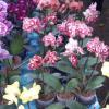 Buka Flona 2014, BTP Ceritakan Bunga Anggreknya (Video)