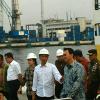 350 Sapi NTT buat Bulog, Ahok: Jakarta Tunggu Giliran
